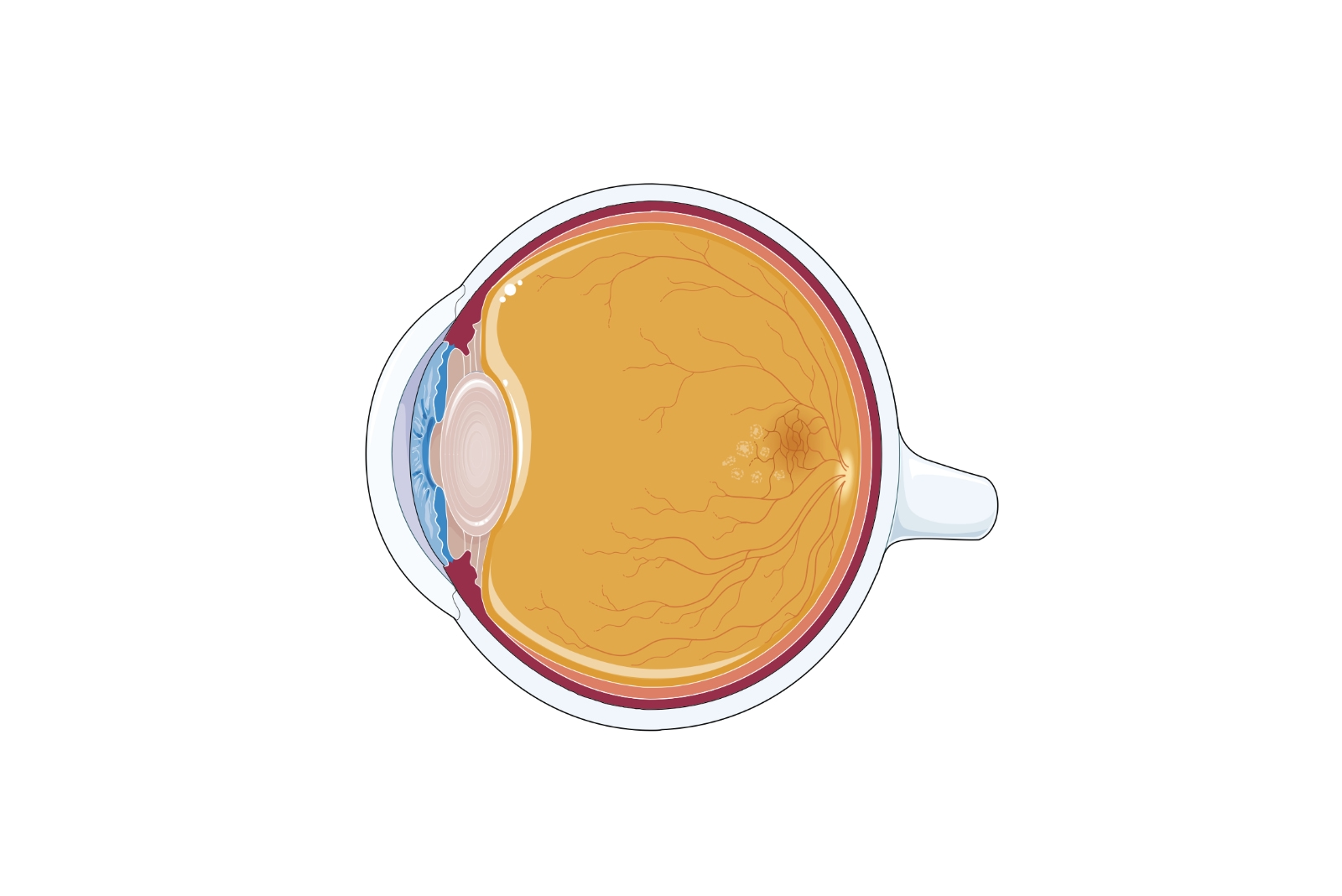 efectul bolilor nervoase asupra vederii
